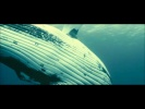 French Documentary - Oceans II - 1080p Eng Subs.avi