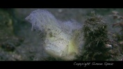EPICENTER - The Wonders of Lembeh Strait