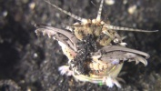 Bobbit Worm - Dinner time